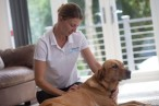 Canine Physiotherapist Yorkshire