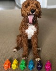 Dog Grooming - MultiPet Images #2