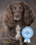 Master Photographers Association Highly Commended Photographer