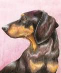 Dog's Pyjamas - Pet portraits by Ellie Jordan