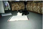 My late Cat, that had 6 kittens.