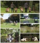 Dogs at Wainsford
