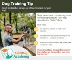 SpiritDog Training | stingy with the treats