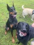 Fetch Your Lead Dog Walking Service
