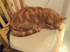The other of the two cats, I had to put an extra chair next to me so they could be close and not steal my chair.