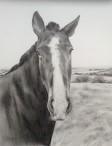 Graphite Horse