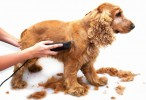 Sharpening Service    Simply2 Pet Products