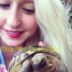Tortoise and small pet care