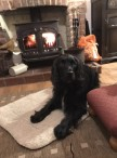 Client Review 2020 East Ruston Cottages - Dog Friendly, Self Catering Holidays in Norfolk