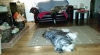 Client Review for East Ruston Cottages - Dog Friendly, Self Catering Holidays in Norfolk