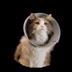 Cat Care Killorglin