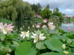 Lotus Lake at the Parc Floral de Court d'Aron