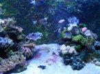 Septieme Continent Aquarium at Talmont