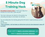 SpiritDog Training | 5 min training hack