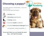 SpiritDog Training - | Choosing a puppy