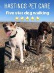 Hastings Fairlight St Leonards Dog Walking Services .jpg