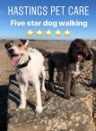 Hastings Fairlight St Leonards Dog Walking Services .jpg
