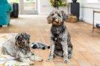 Over 1500 dog-friendly cottages