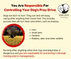 SpiritDog Training | Prey Drive