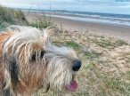 Fantastic dog friendly beaches, what more could a pooch wish for