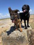 The best Hastings Dog walkers