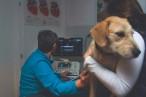 Veterinary Brand Photography