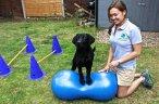 dog physio birmingham midlands