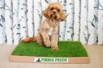 Piddle Patch | Soil-Free, Real Grass Toilet For Dogs