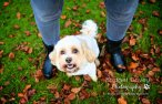 Roxy   | Professional Dog & Pet Photography London, Bedfordshire, Hertfordshire, Buckinghamshire