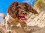Bounders Dog Photography | Chesterfield