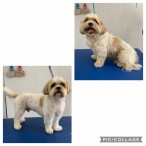 Kings Pet Services | Dog Grooming | Canterbury