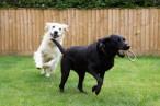 My Best Friend (Dog Walker) Blackpool and Preston
