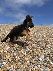 Prince St Leonards Dog Walker - Hastings & Fairlight.JPG