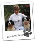 Wagging Tails Southampton - Dog Sitting   Home Boarding