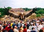 Puy du Fou Bird Show