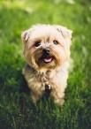 Penquite Pet Care - Cornwall