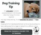 SpiritDog Training | Proactive Training