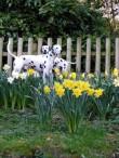 Pet-sit-dalmation-Doncaster.jpg