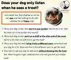 SpiritDog Training | Fixated with treats