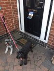 Lola and Ollie helping me post flyers