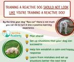 SpiritDog Training | Reactive dog