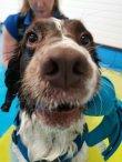 Fit4dogsuk dog swimming