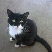 Colchester Cat Rescue