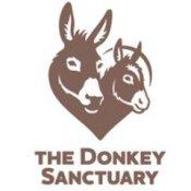 The Donkey Sanctuary - Sidmouth, Devon