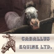 Caballus Equine Ltd. - Equine Vets on the Isle of Wight