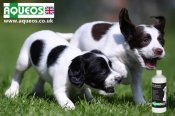 Aqueos - Canine Disinfectants, Shampoo & First Aid Products