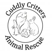 Cuddly Critters Small Animal Rescue - Essex