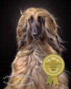 Master Photographers Association Portrait Photographer of the Month