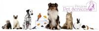 Precious Pet Services   Surrey