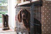 The Cosy Canine Company - Maldon, Essex